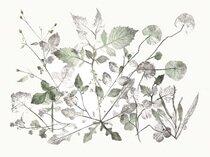 HERBARIUM VIVVM - A RICH CONFUSION<BR>Shelagh Morgan